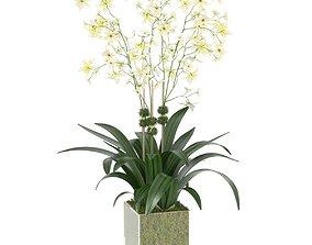 3D model DIANE JAMES Cream Oncidium Orchid Arrangement