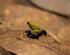 3D Poison Dart Frog