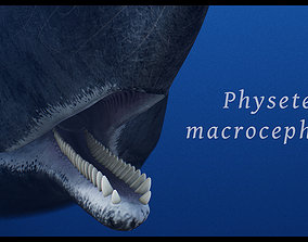 cetceo Sperm Whale 3D model animated