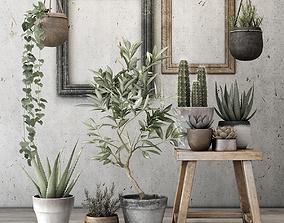 3D model Plants pot-plant