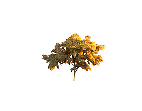 Low Poly Tree Autumn Stylish 3D asset realtime