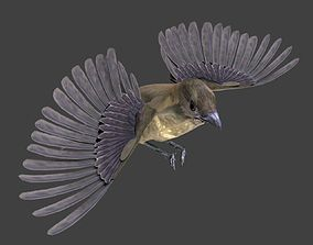 Vogelkop bowerbird 3D model animated
