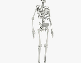 Skeleton 3D Models | CGTrader