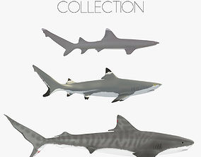 Sharks collection 3D asset
