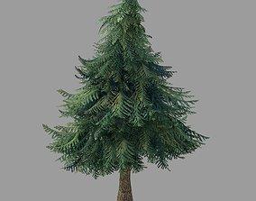 3D model Plants - Pine 86