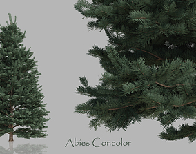 Realistic Conifer Trees Pack 3D asset