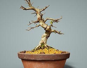 pot 3D model game-ready Bonsai Tree