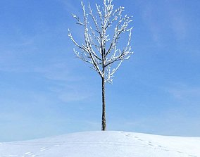 3D Bare Solitary Winter Tree