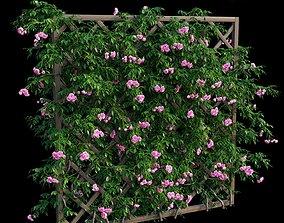 Rose plant set 32 3D model