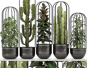3D model cereus Collection of Exotic Plants