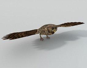 3D asset low-poly Owl bird