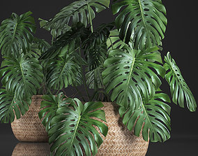 3D model Decorative Monstera in a pot