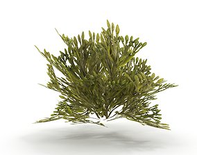 3D asset Egg Wrack seaweed V2