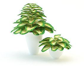 Plants Dieffenbachia 1 3D model