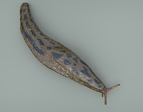 Great Slug 3D model
