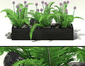 Flowerbed with fern and alliums 3D model