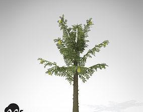3D XfrogPlants Alethopteris