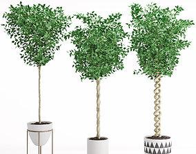 Houseplant 31 3D