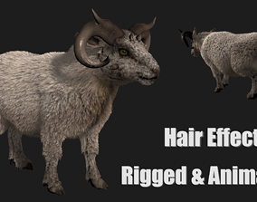 3D hair effect sheep
