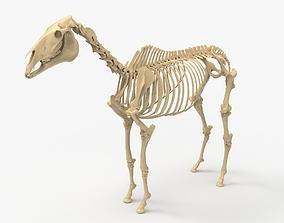 Horse Skeleton 3D printable model