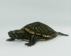 Turtle 3D asset VR / AR ready