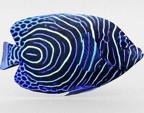 Angelfish Emperor 3D model