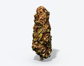 3D model Marijuana Bud - Photoscanned PBR