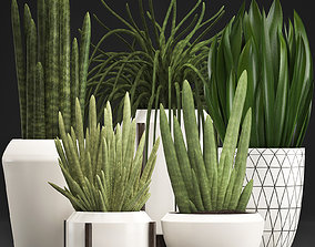 Collection of Exotic plants Sansevieria 3D