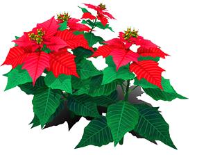 Flower Euphorbia Pulcherrima 3D model