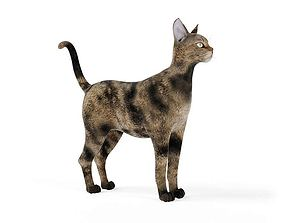 Brown And Tan Cat 3D