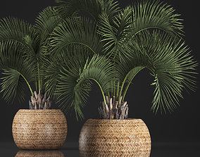 3D model Decorative palm tree in a pot 5