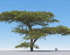 flower 3D model Large hero tree v2