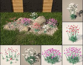 3D maiden pink set Dianthus deltoides