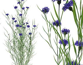 3D knapweed flower