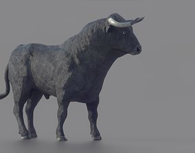 3D asset Spanish Fighting Bull