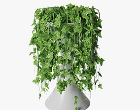 3D ivy in pot 04