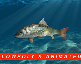 3D asset Very low poly animated River Redhorse fish