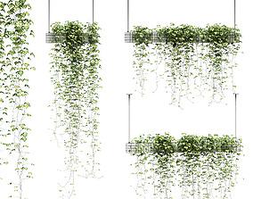 Ivy in hanging pots - 3 models