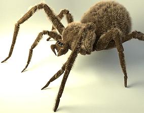 Shaggy spider 3D asset