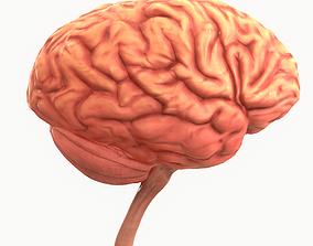 Human Brain 3D asset game-ready