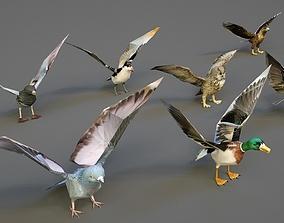 Animal bird lowpoly 3D model