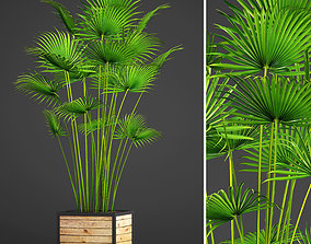 3D Palm bush
