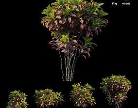 Croton plant set 05 3D doannguyen
