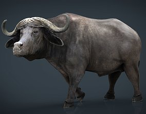 African Buffalo 3D model