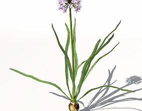 XfrogPlants Onion 3D model
