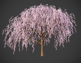 3D XfrogPlants Weeping Cherry - Prunus Pendula