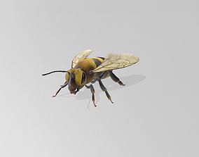 3D print model Bee STL