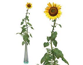 3D model realtime Sunflower in glass vase