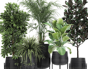 Collection of decorative plants in flowerpots 769 3D