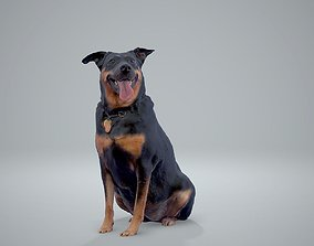 3D model Sitting Dog Dog0001-HD2-P01-S